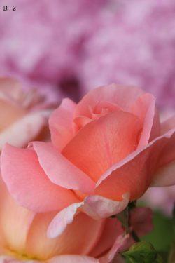 bloemen (2) + nummer
