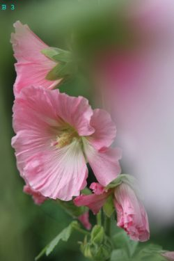 bloemen (3) + nummer