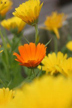 bloemen (4) + nummer