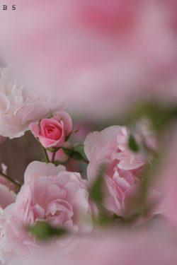 bloemen (5) + nummer