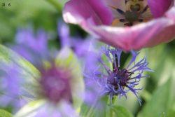 bloemen (6) + nummer