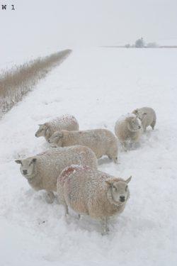 winter (1) + nummer
